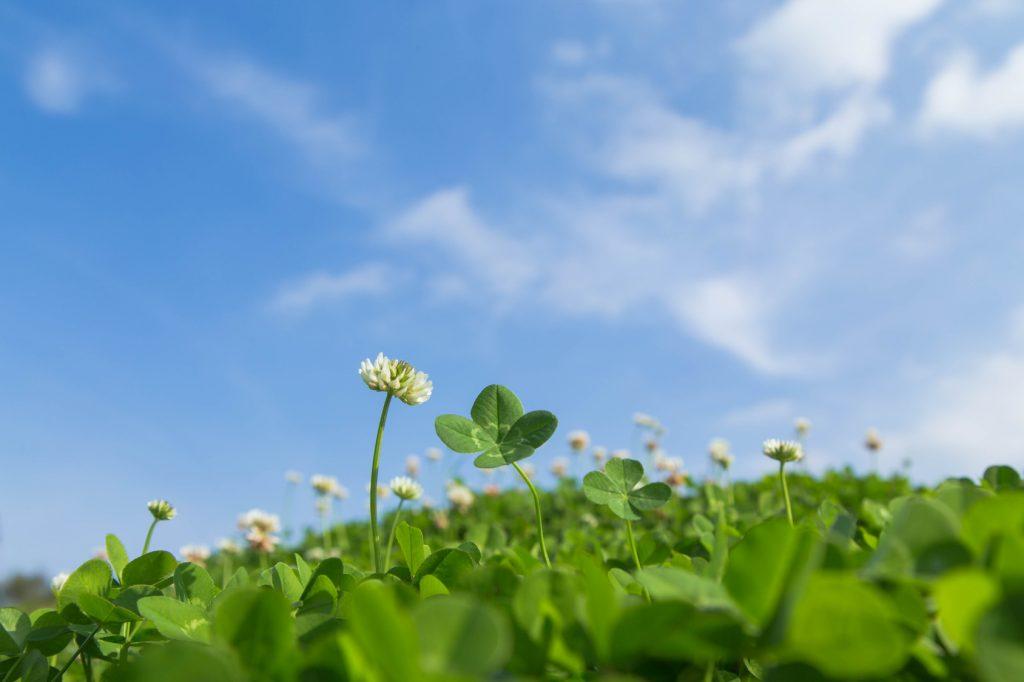 PlantsGroupの新ホームページ四つ葉のクローバーと青空
